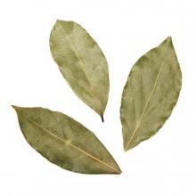 Imagen en la que se ven hojas de laurel