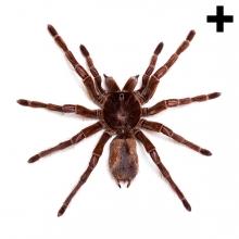 Imagen en la que se ve una araña en perspectiva cenital