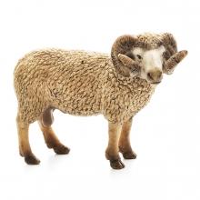 Imagen en la que se ve una cabra en perspectiva lateral