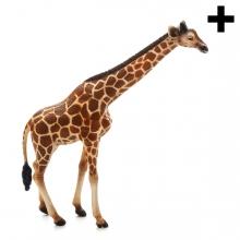 Imagen en la que se ve un jirafa en perspetiva lateral