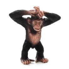 Imagen en la que se ve un chimpancé con los brazos levantandos y cruzados sobre la cabeza