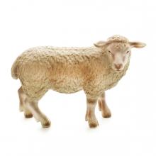 Imagen en la que se ve una oveja en perspectiva lateral