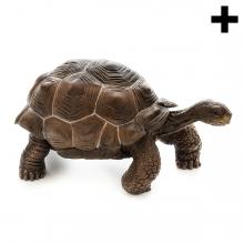 Imagen en la que se ve una tortuga terrestre en perspectiva lateral