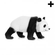Imagen en la que se ve el plural del concepto oso panda