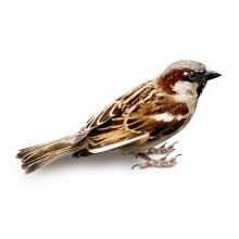 Imagen en la que se ve un pájaro