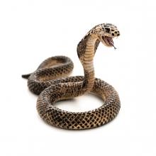 Imagen en la que se ve a una cobra