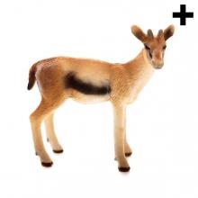 Imagen en la que se ve el plural del concepto gacela