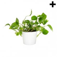 Imagen en la que se ve el plural del concepto planta