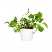 Imagen en la que se ve una planta