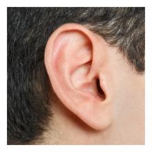 Imagen en la que se ve una oreja