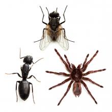 Imagen en la que se ven tres insectos: una hormiga, una araña y una mosca