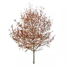 Imagen en la que se ve un árbol con hojas secas