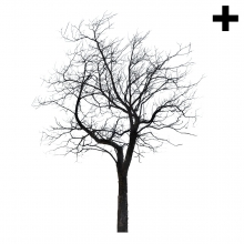 Imagen en la que se ve el plural del concepto árbol de invierno