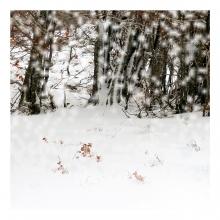 Imagen en la que se ve el concepto nieve