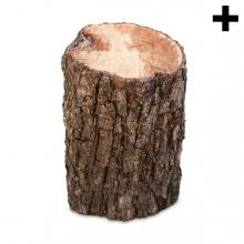 Imagen en la que se ve el plural del concepto tronco