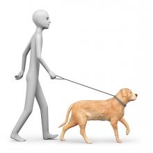 Una persona pasea al perro