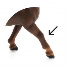 Imagen en la que se ve una pata de animal
