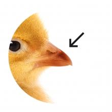Imagen en la que se ve un pico de animal