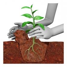 Unas manos plantan una planta en la tierra