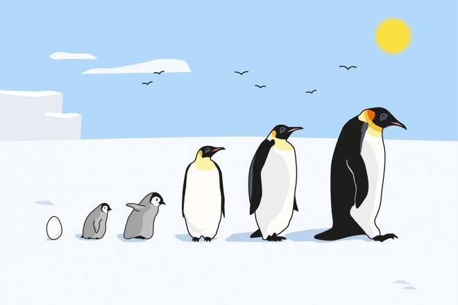 Lámina ilustrada con diferentes pingüinos de perfil